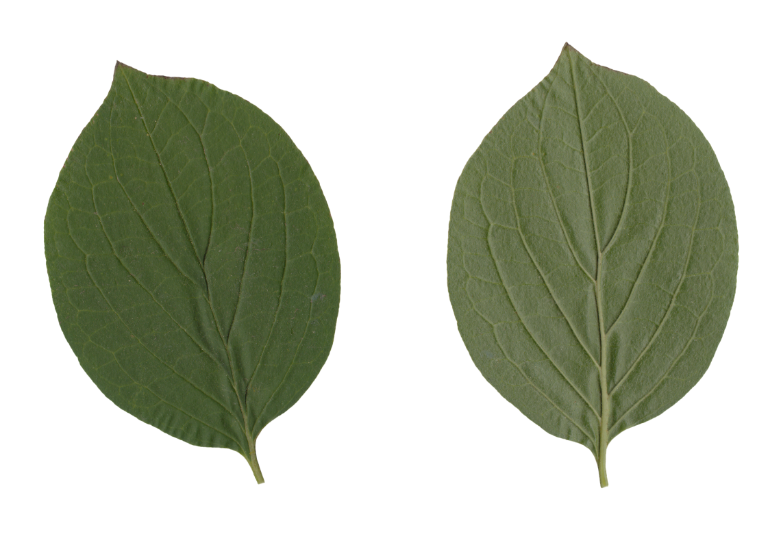 Nature Leaves_0069