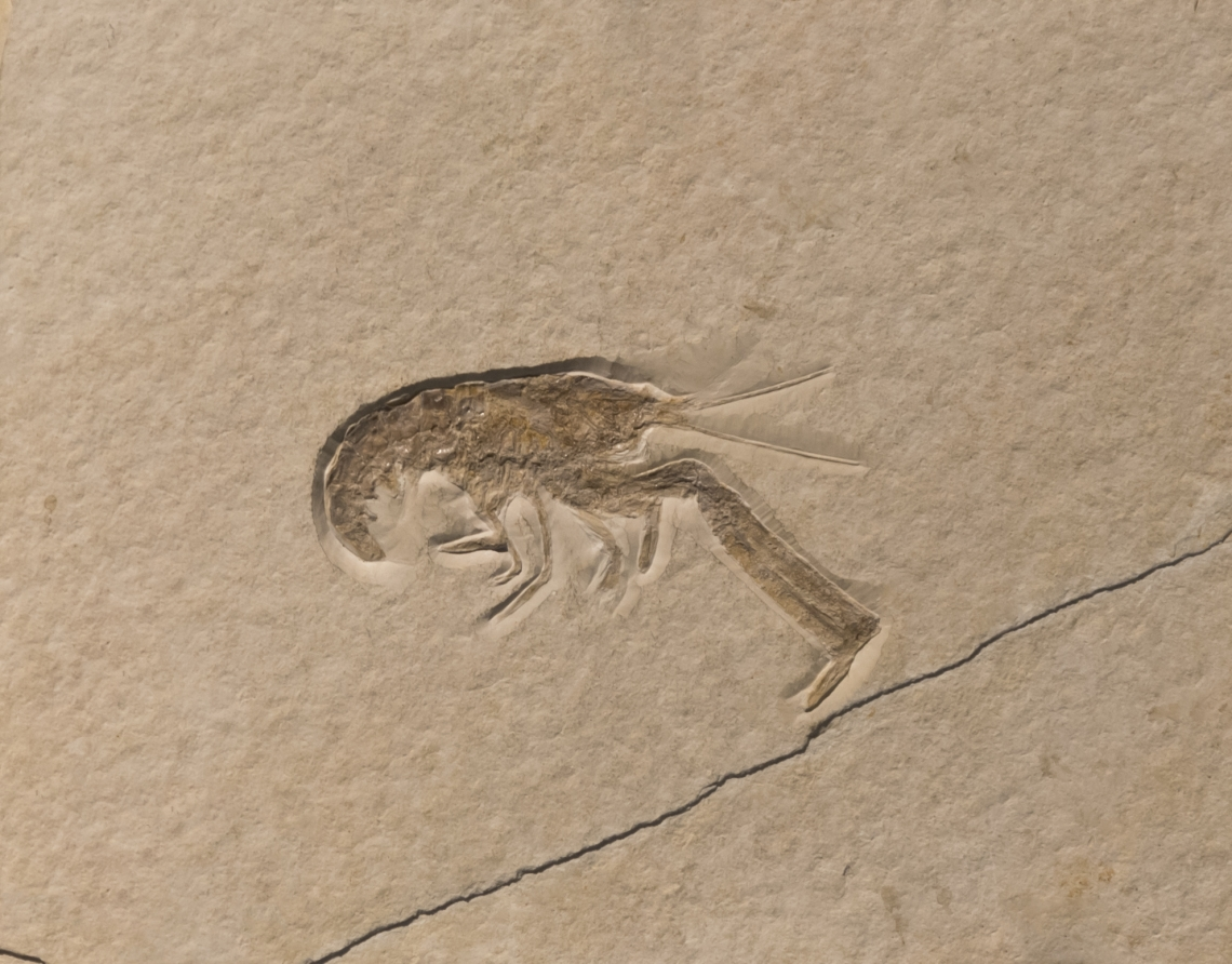Fossils_Mixed_0014