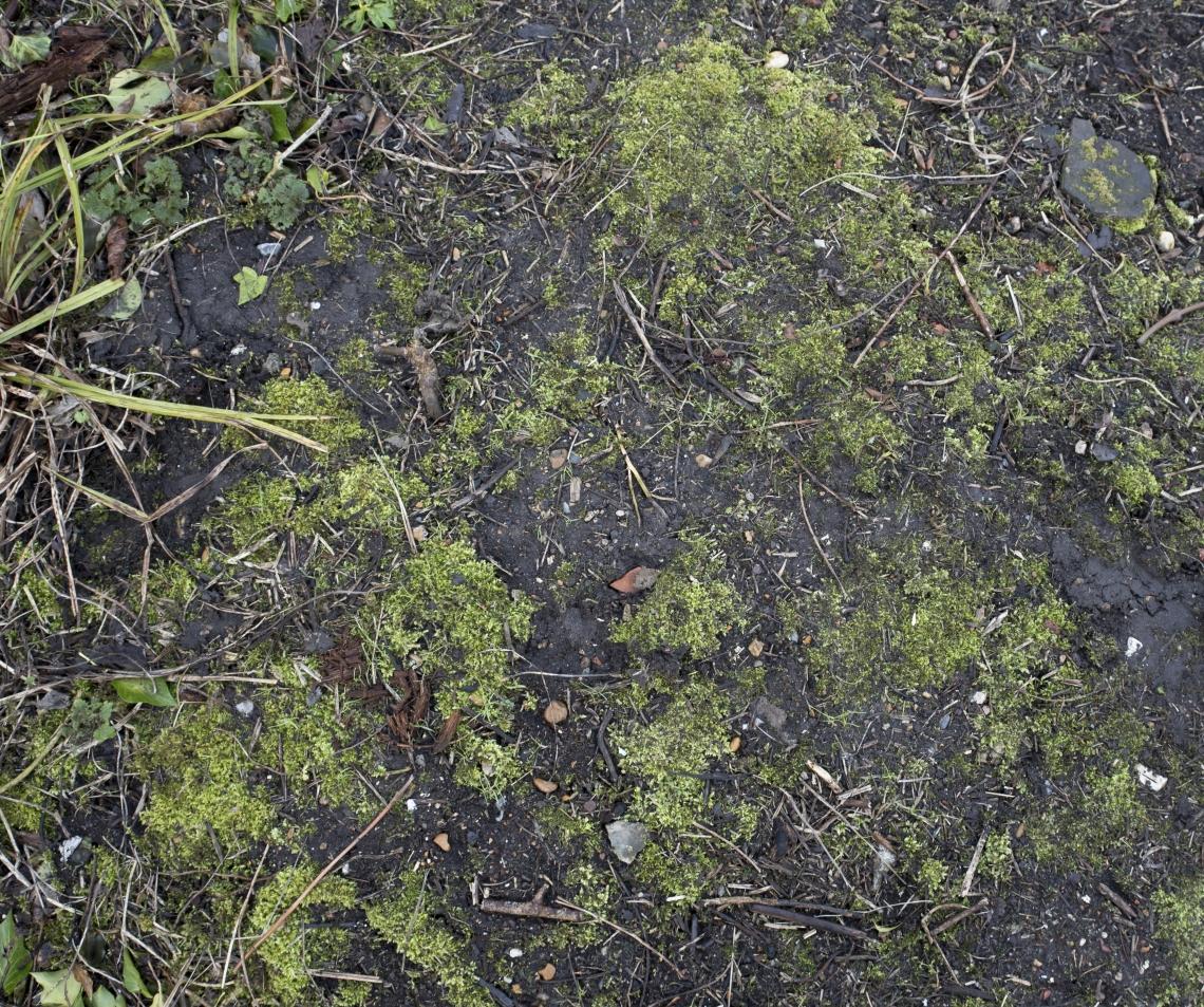 Ground Overgrown 0009