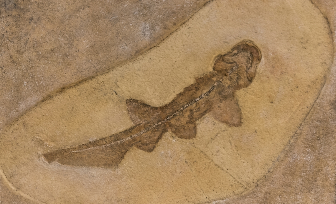 Fossils_Mixed_0007