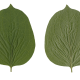 Nature Leaves_0042