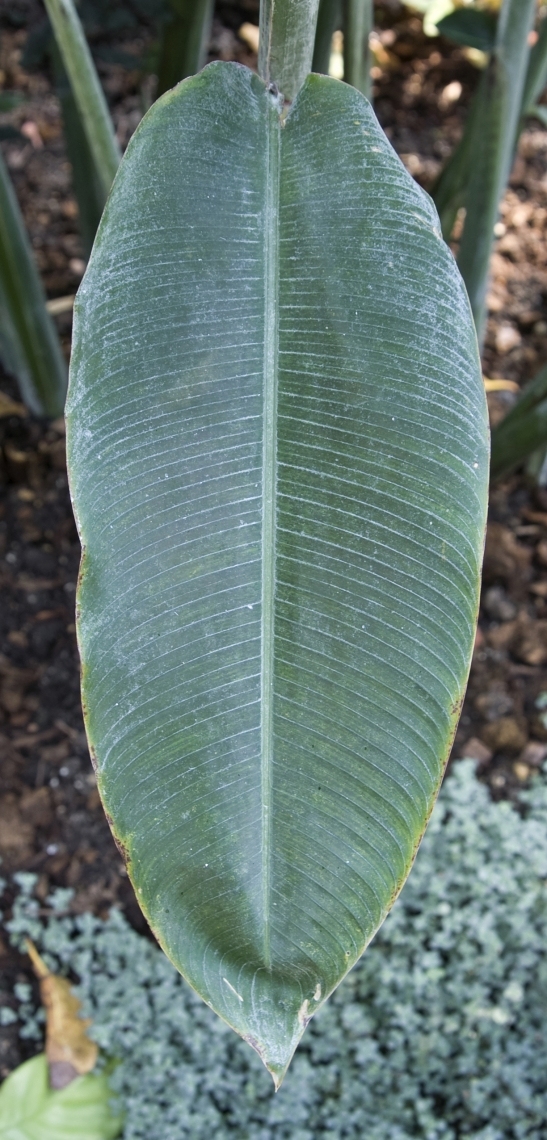Leaves Tropical