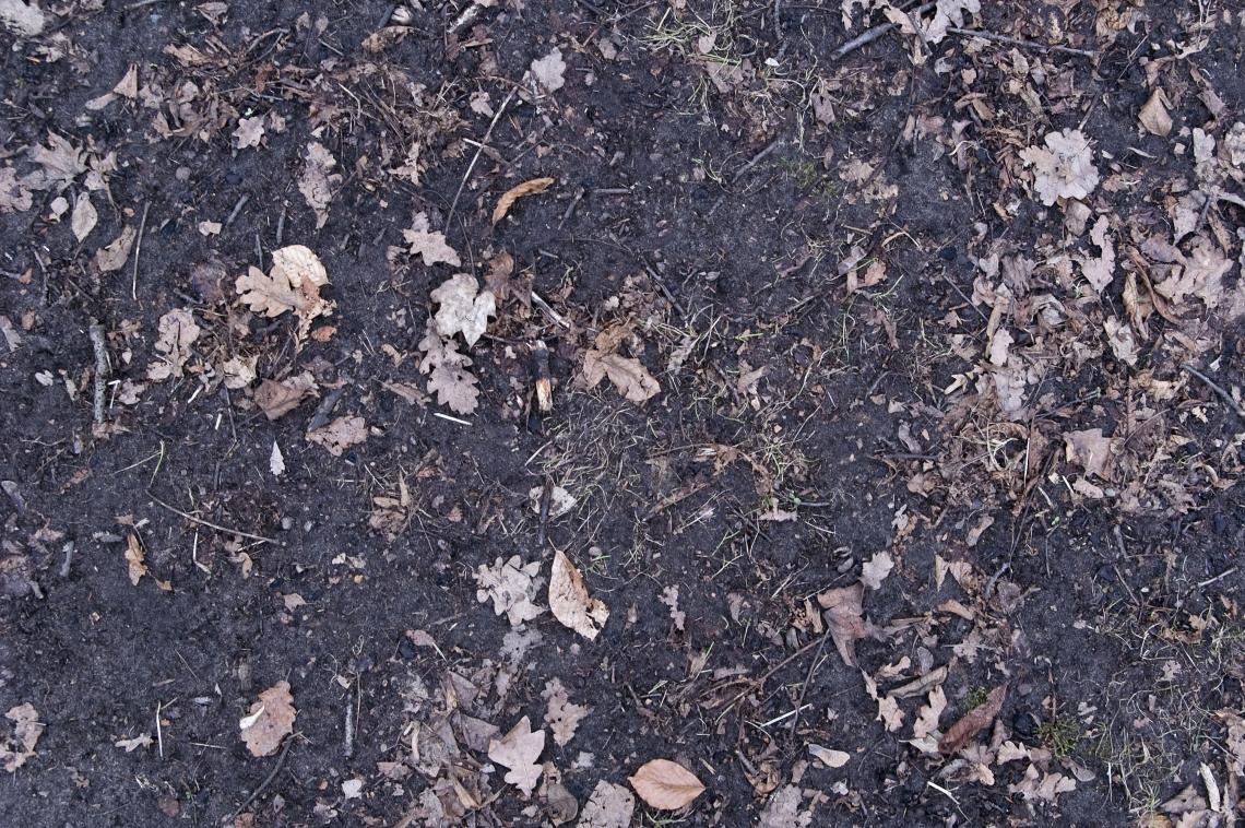 Leaves Dead