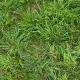GrassGreen0202