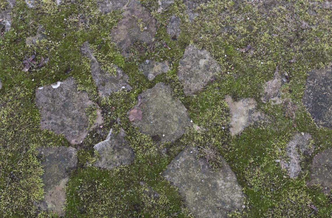 Ground Stoney 0139