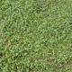 GrassGreen0199
