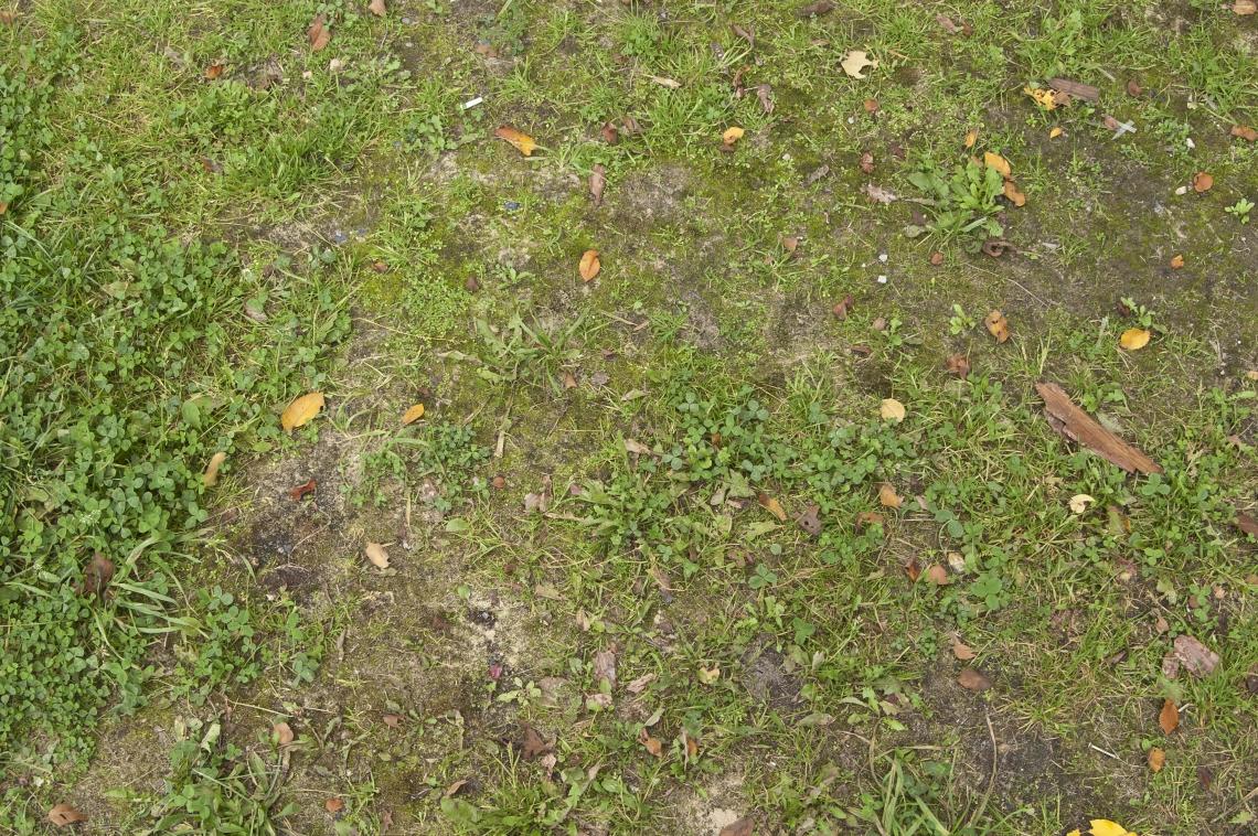 GrassGreen0203