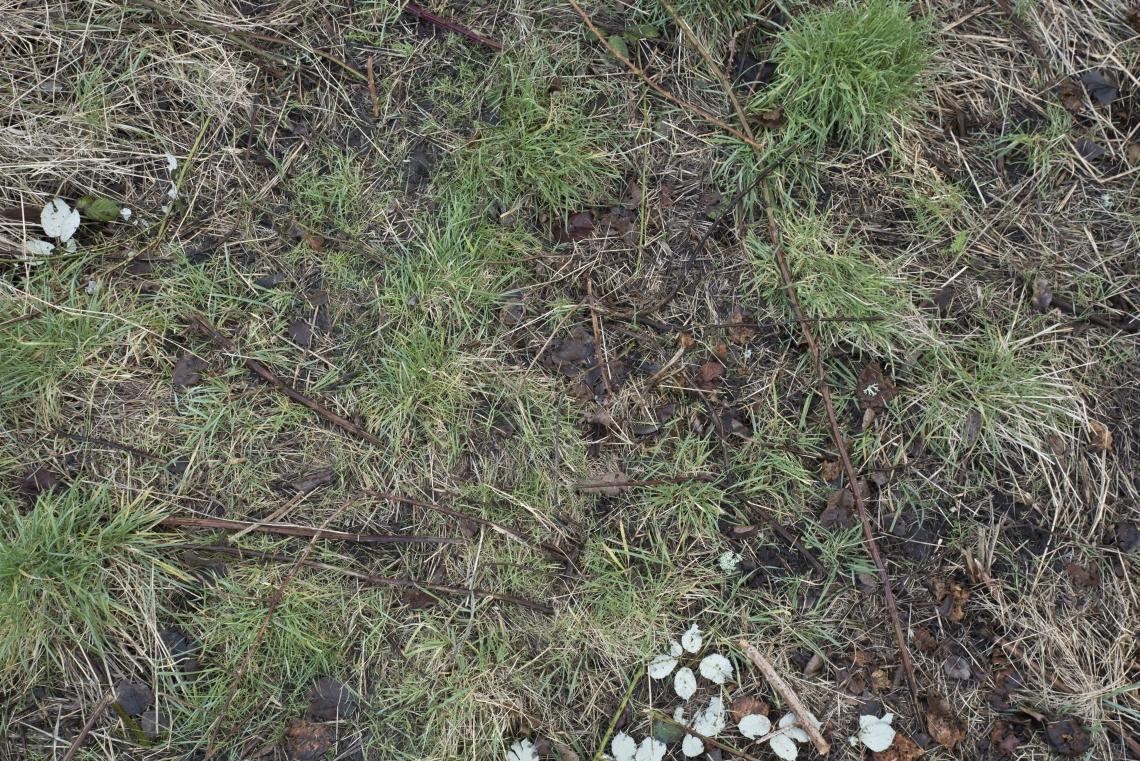 Ground Overgrown 0005