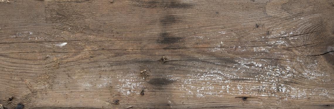 Wood Planks Old 0241