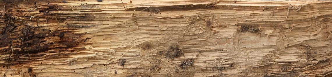 Wood Bare 0258