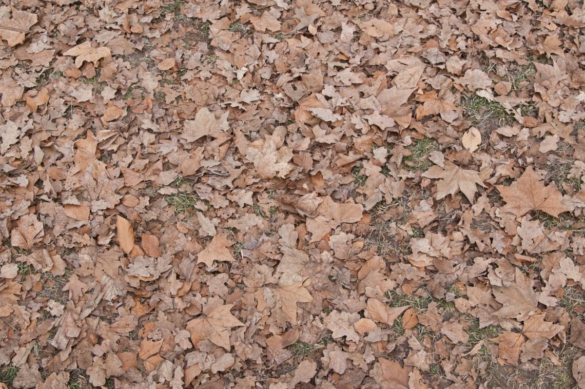 LeavesDead0102