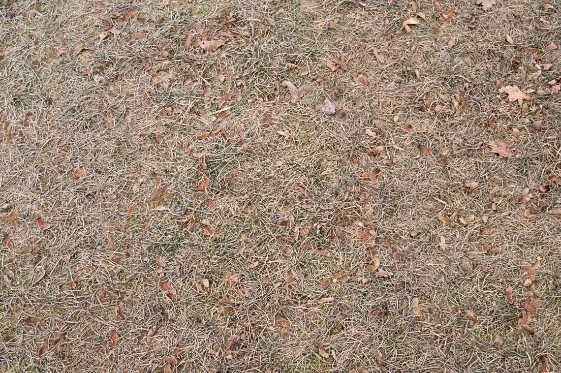 Grass Dead_0062