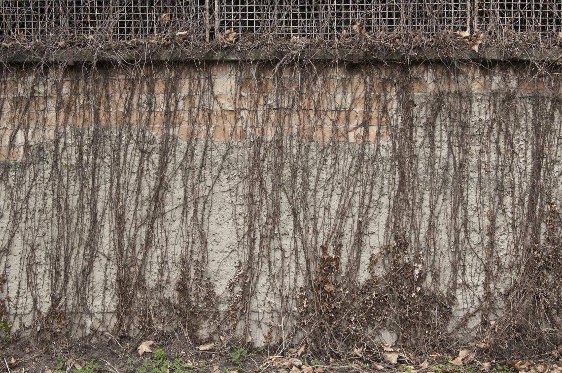 Concrete Overgrown