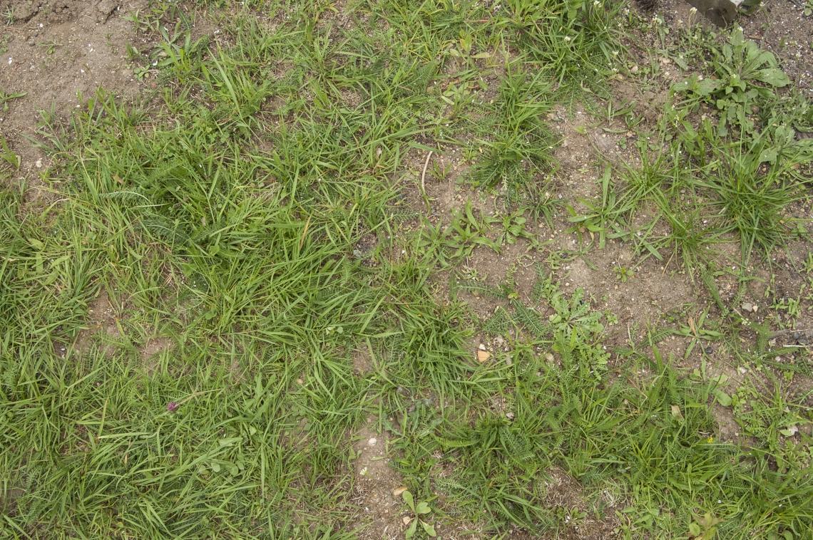 Grass Green 0206