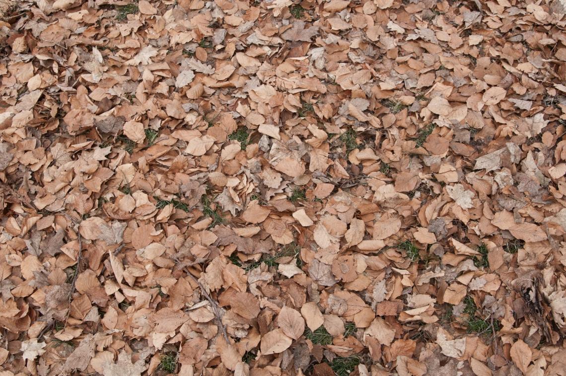 LeavesDead0100
