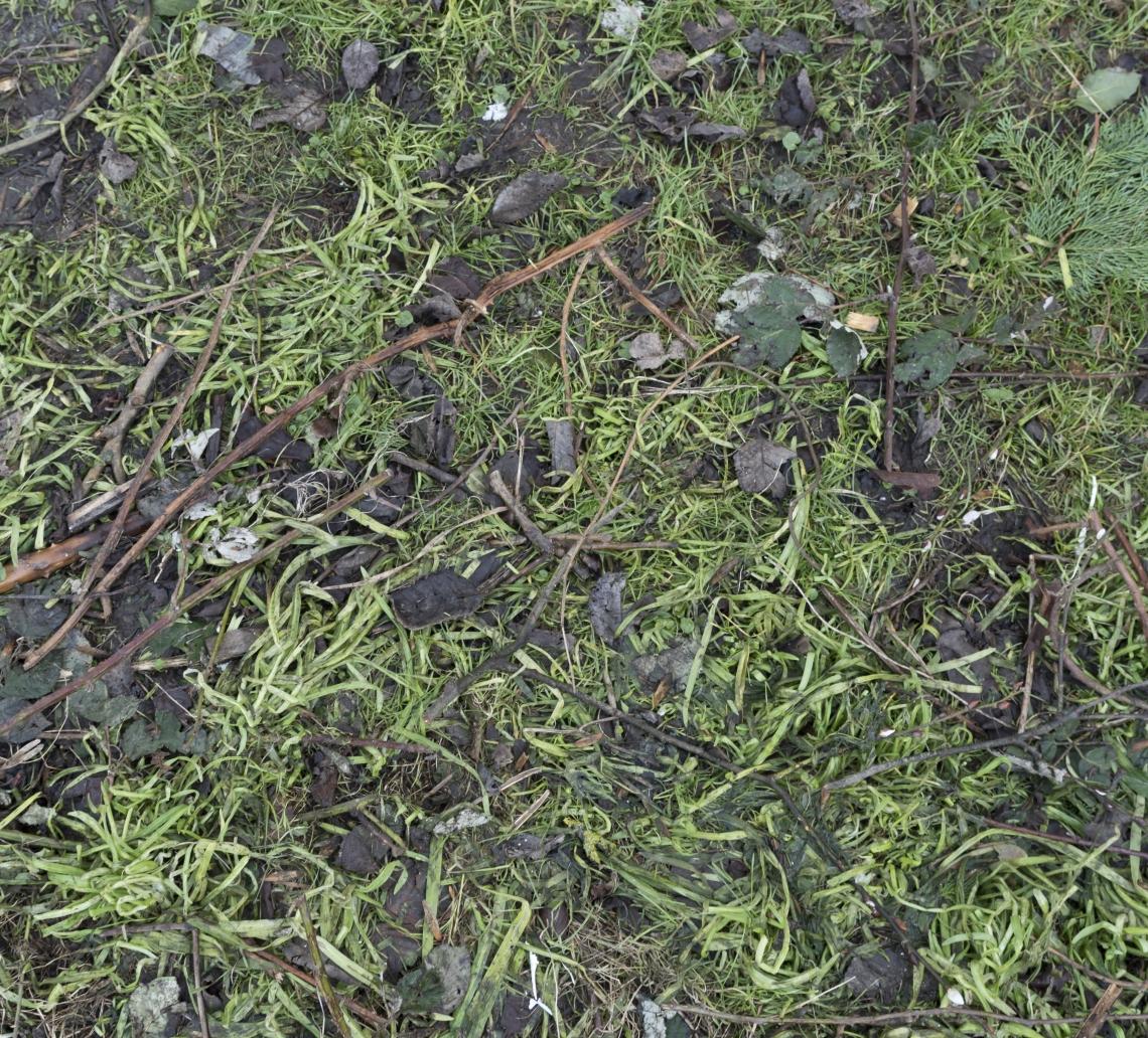 Ground Overgrown 0007