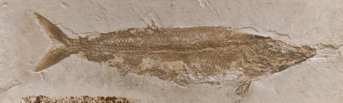 Fossils_Mixed_0003