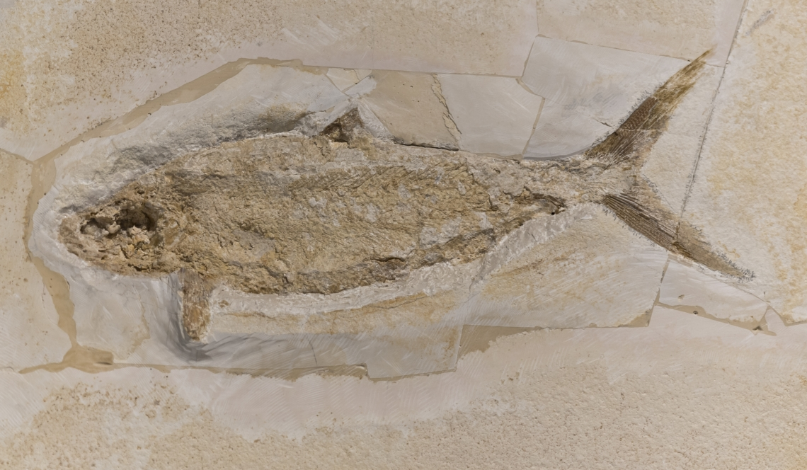 Fossils_Mixed_0006