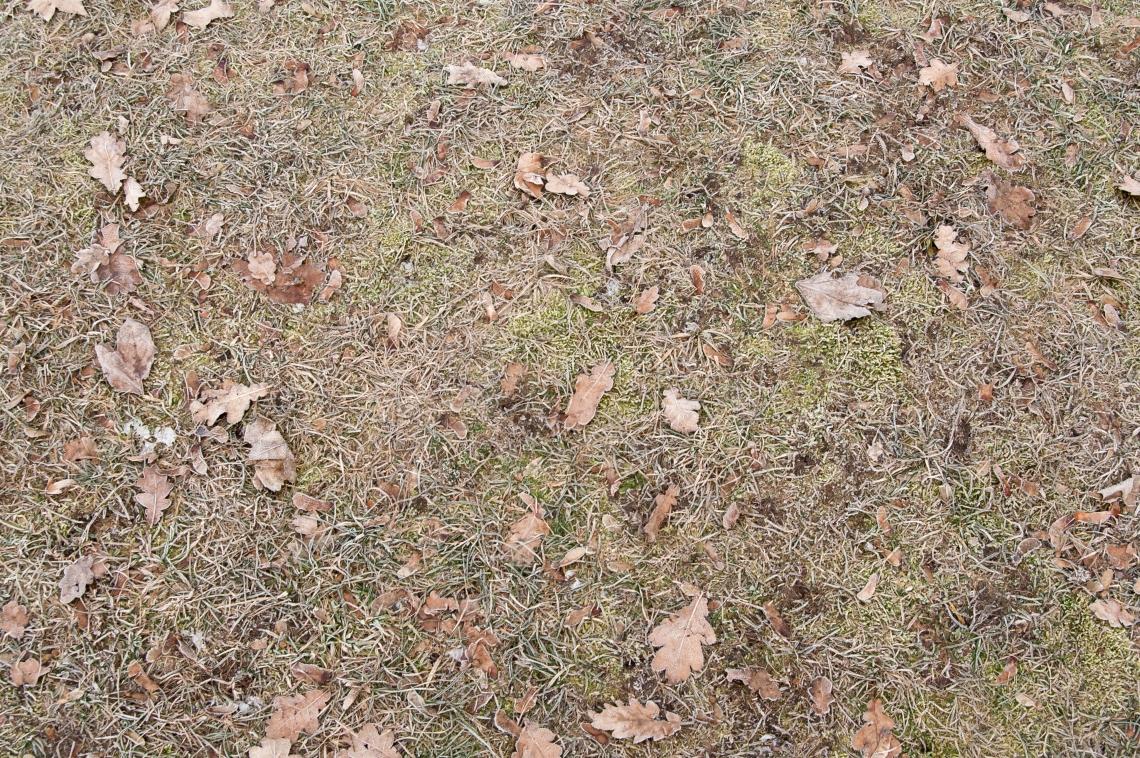 Grass Dead_0061