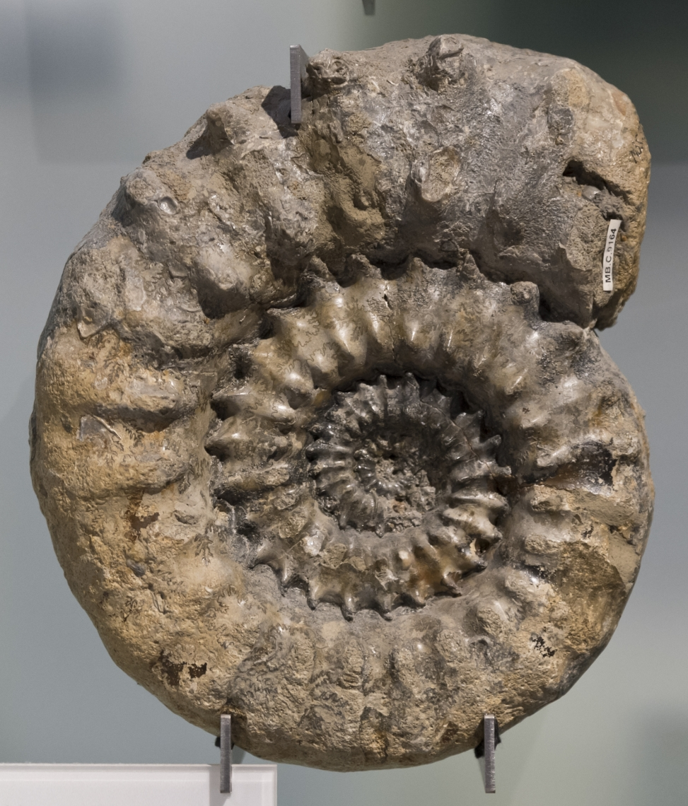 Fossils_Mixed_0018