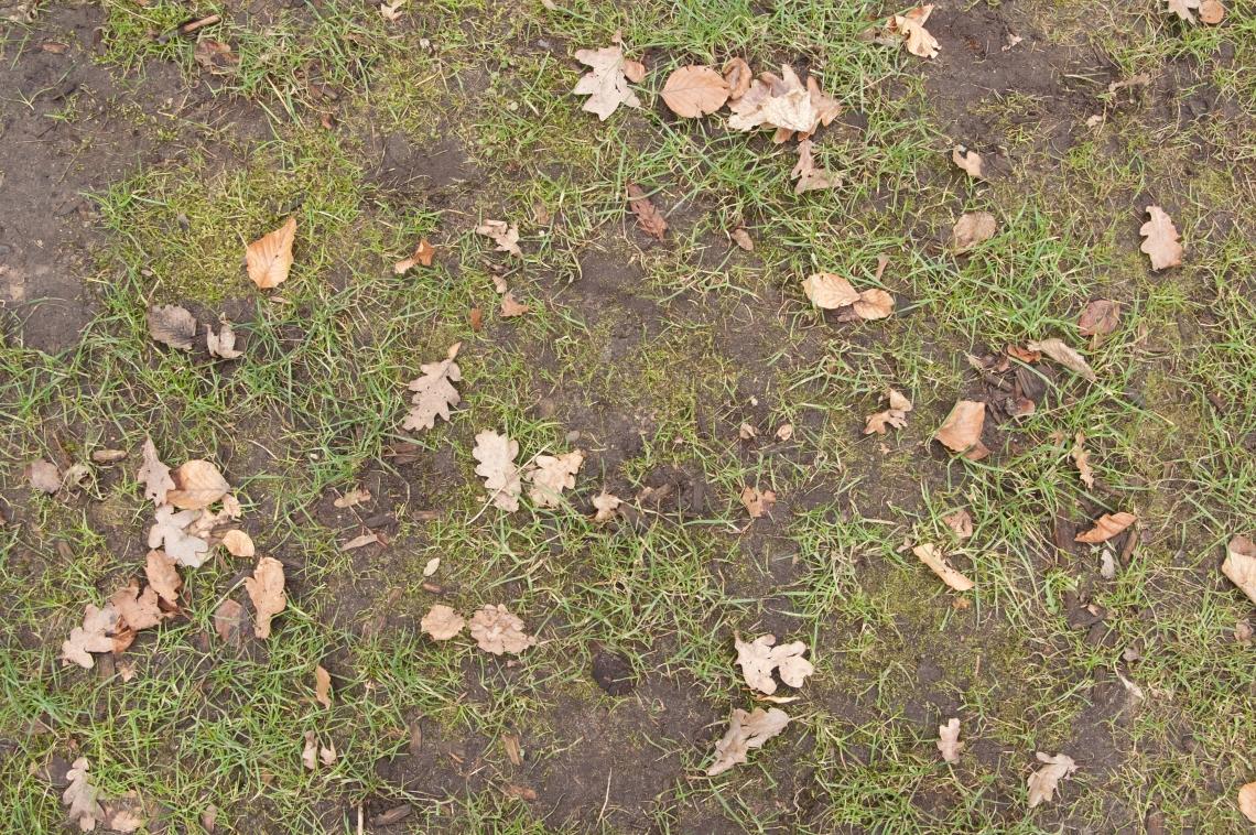 Grass Green 0204