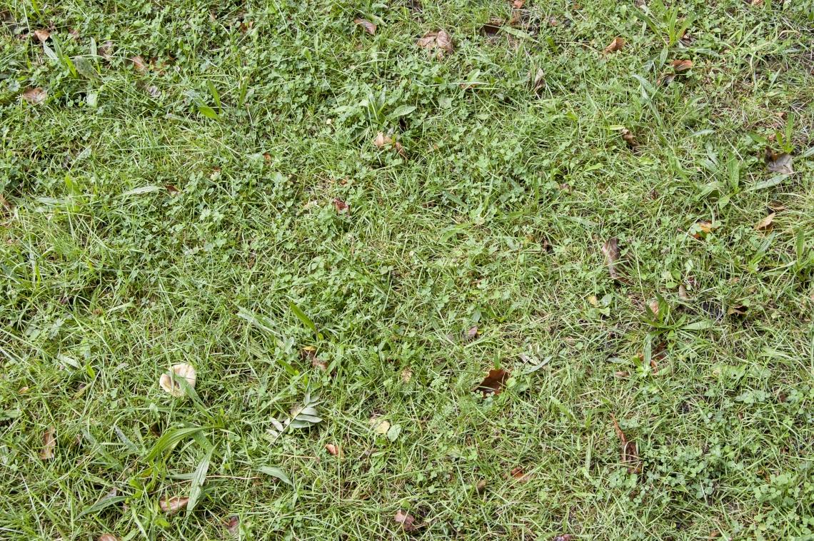 GrassGreen0198