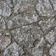 Ground Stoney 0137