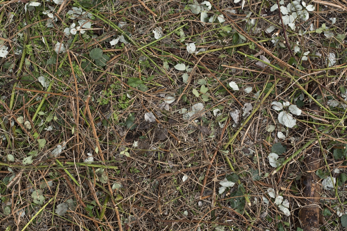 Ground Overgrown 0002
