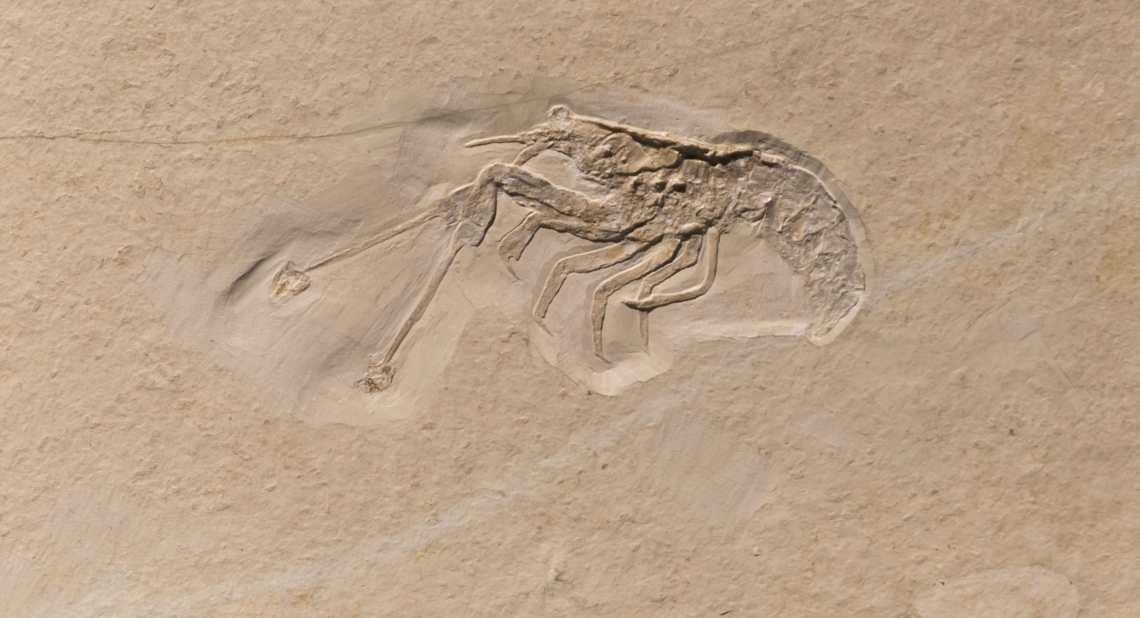 Fossils_Mixed_0015
