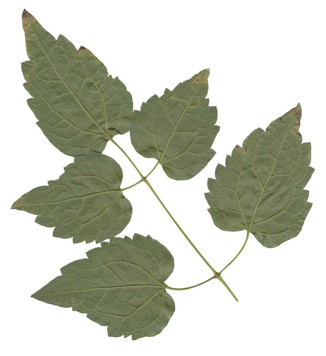 Nature Leaves_0078