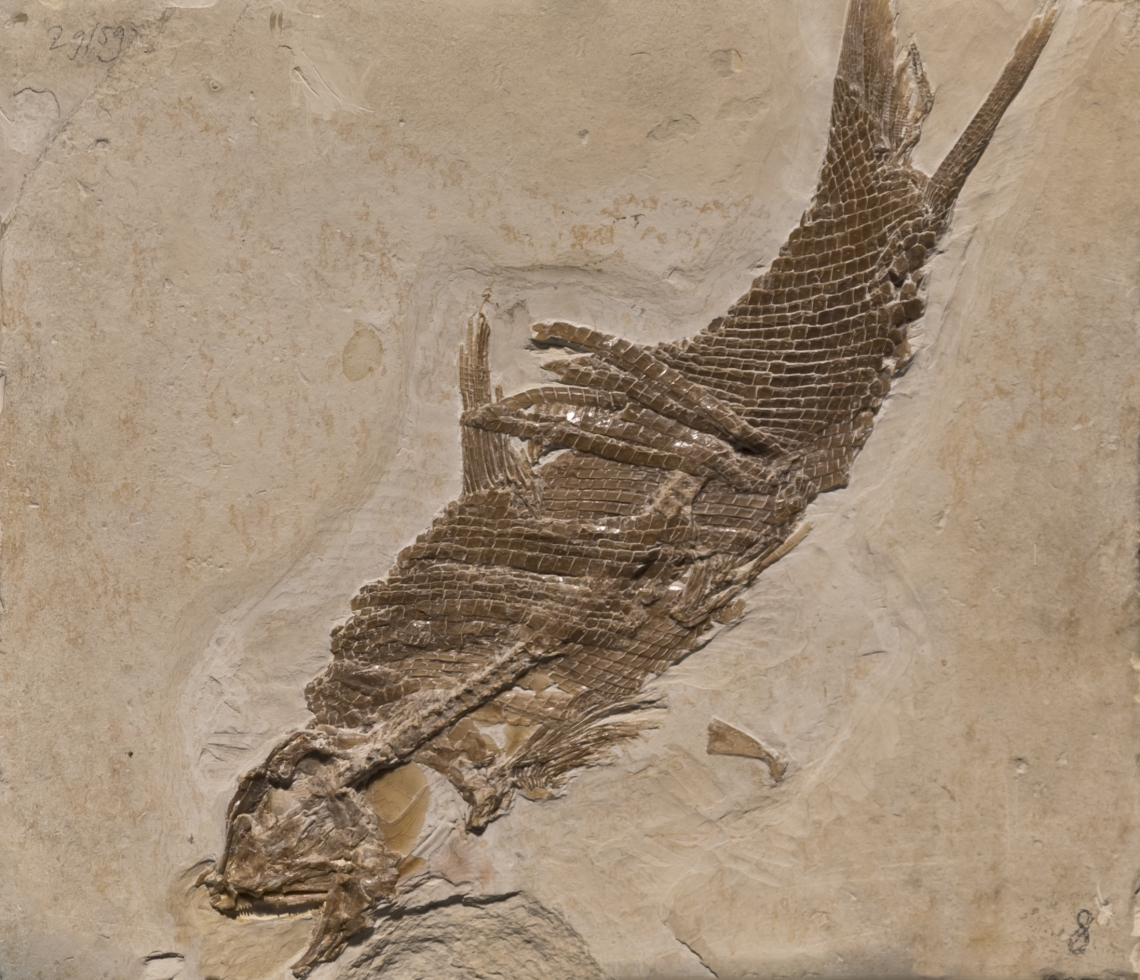 Fossils_Mixed_0012