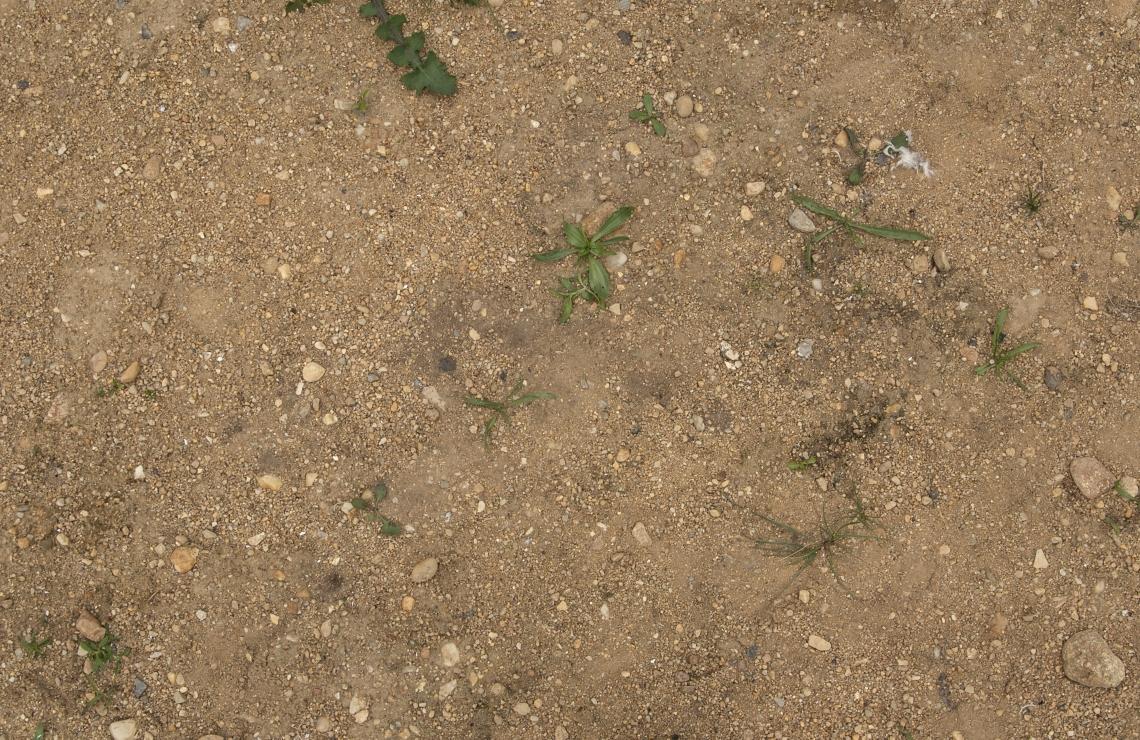 Ground Sandy 0087