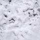 Snow Footprints