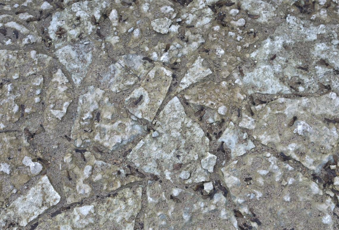 Ground Stoney 0133