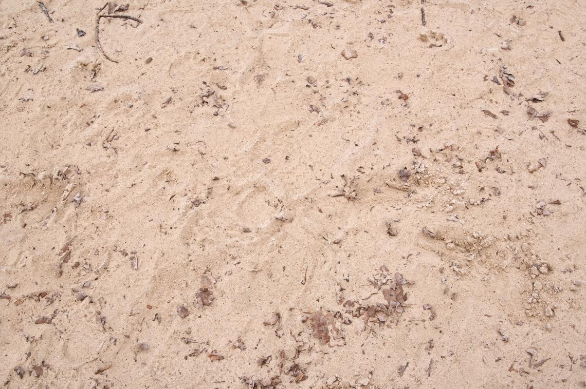 Ground Sandy_0078