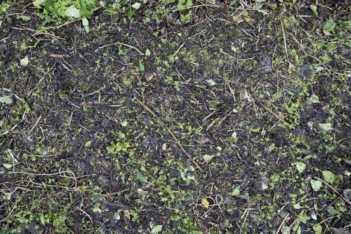 Ground Overgrown 0012