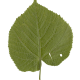 Nature Leaves_0046