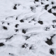Snow Footprints