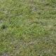 GrassGreen0197