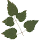 Nature Leaves_0077