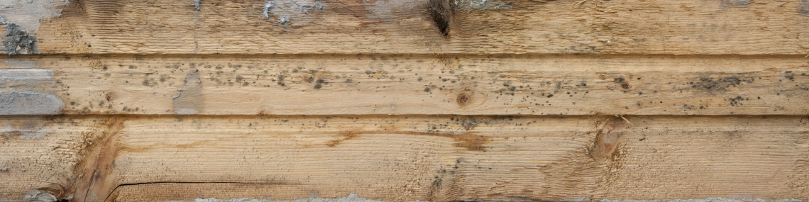 Wood Planks Old 0282