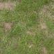 Grass Green 0207
