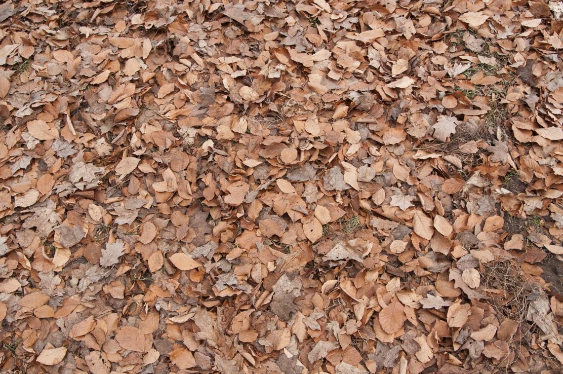 LeavesDead0101