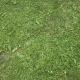 Grass Green 0209