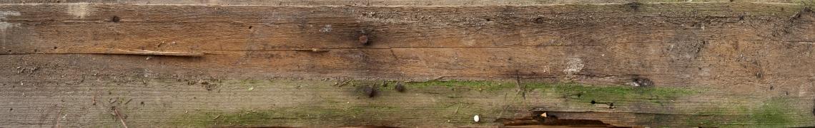Wood Planks Old 0239