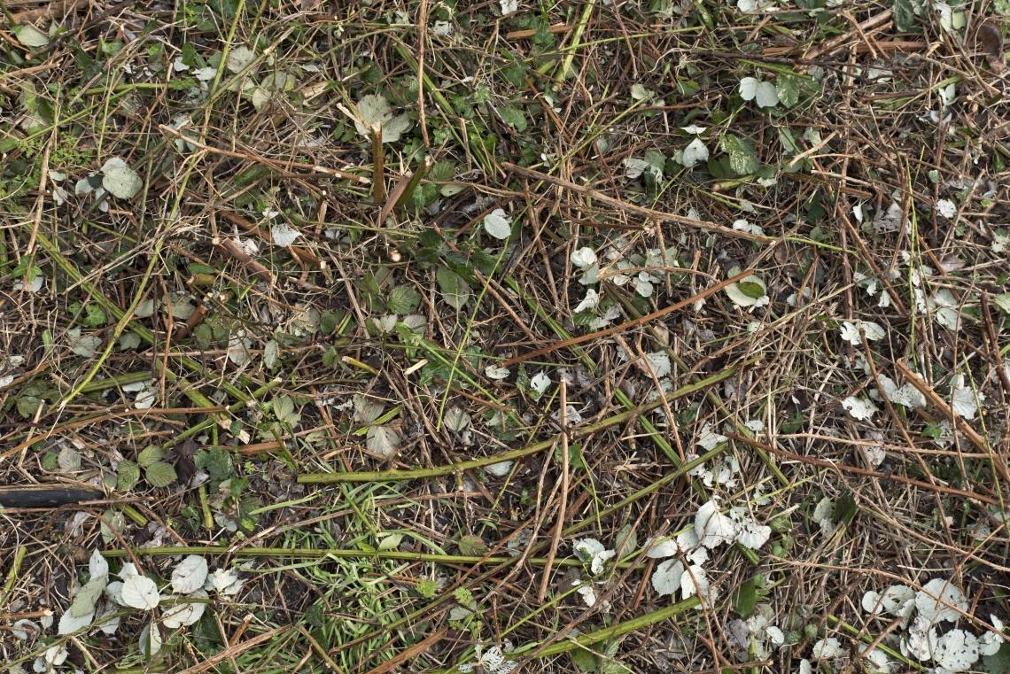 Ground Overgrown 0001