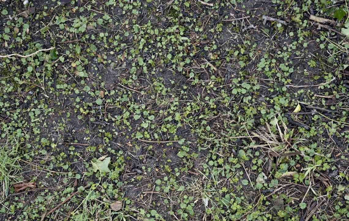 Ground Overgrown 0015