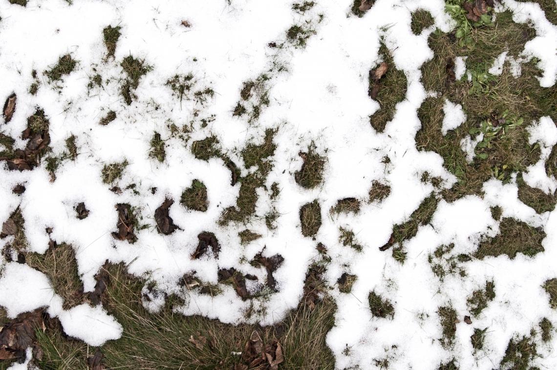 Snow Mixed
