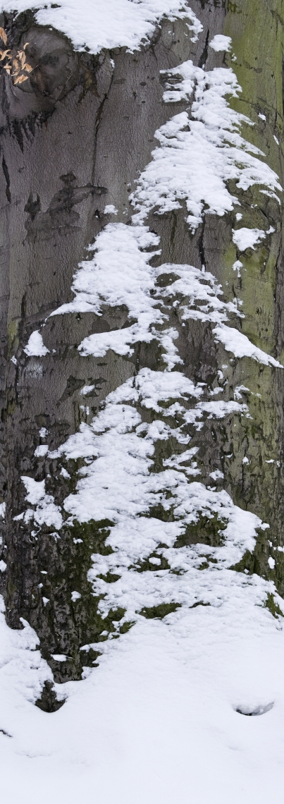 Deciduous Snow