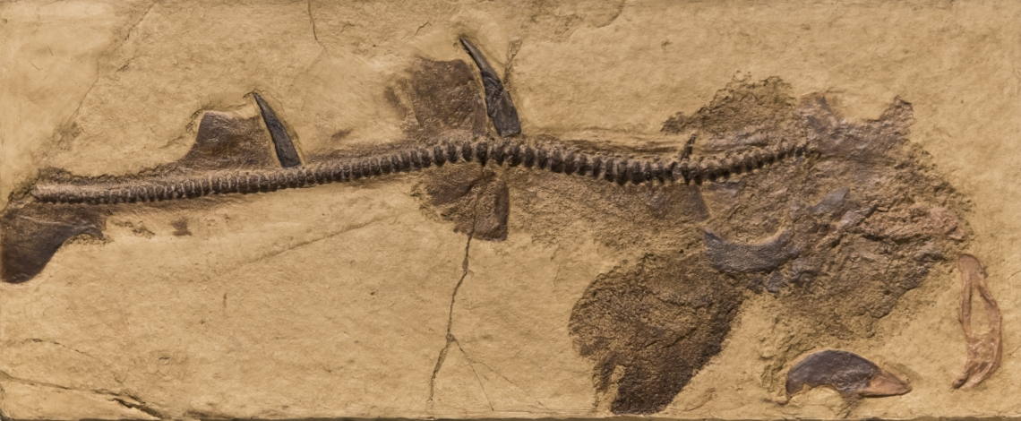 Fossils_Mixed_0010
